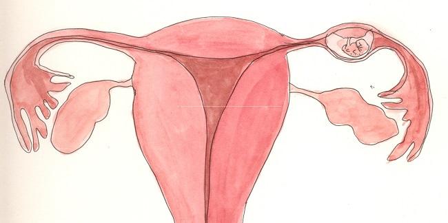 Время беременности